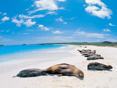 ガラパゴス諸島の画像 p1_37